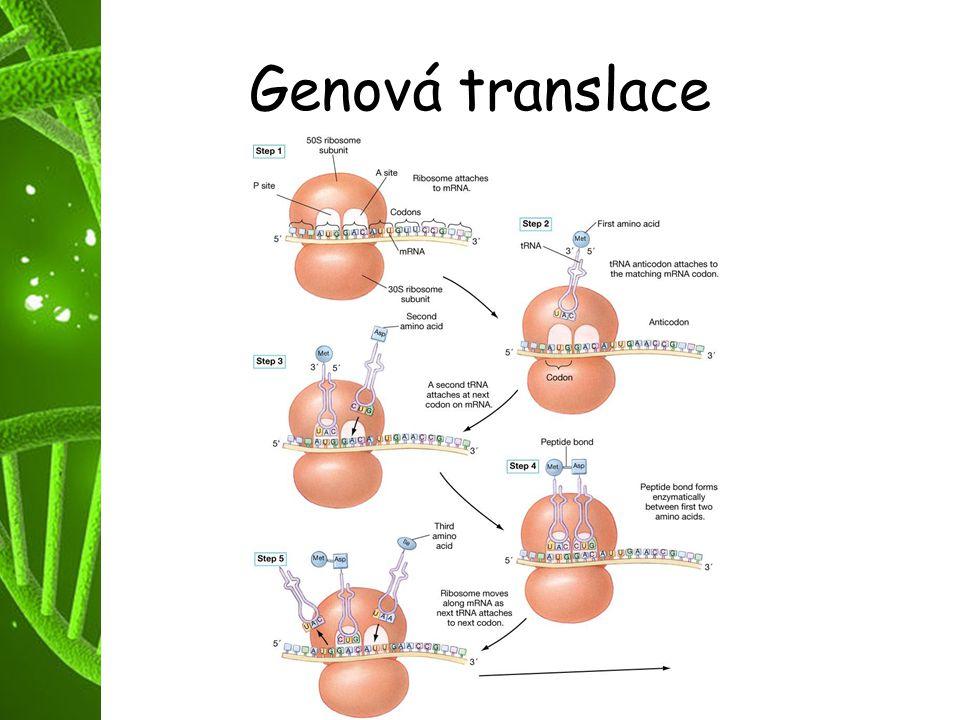 Genová translace