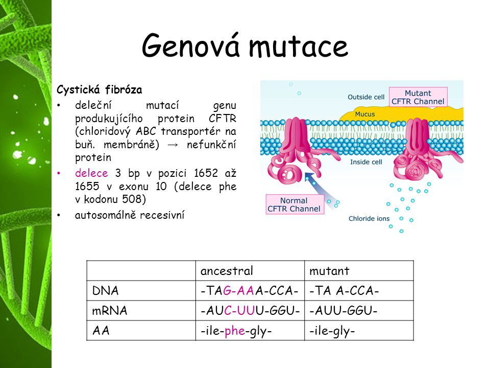 Genová mutace ancestral mutant DNA -TAG-AAA-CCA- -TA A-CCA- mRNA