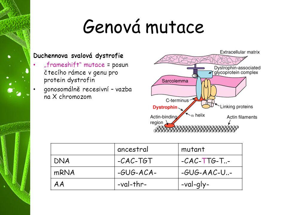 Genová mutace ancestral mutant DNA -CAC-TGT -CAC-TTG-T..- mRNA