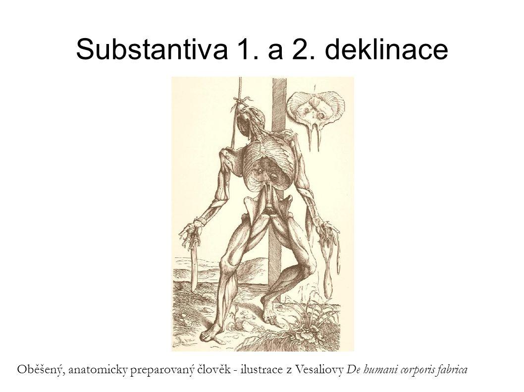 Substantiva 1. a 2. deklinace