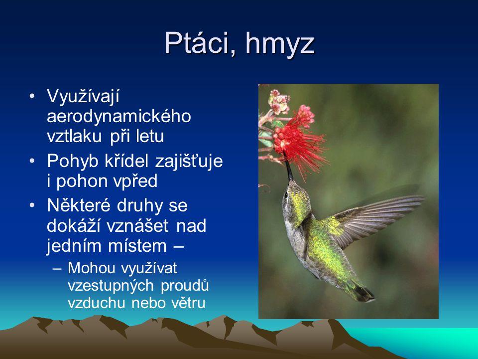Ptáci, hmyz Využívají aerodynamického vztlaku při letu
