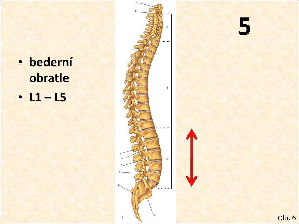 5 bederní obratle L1 – L5 Obr. 6