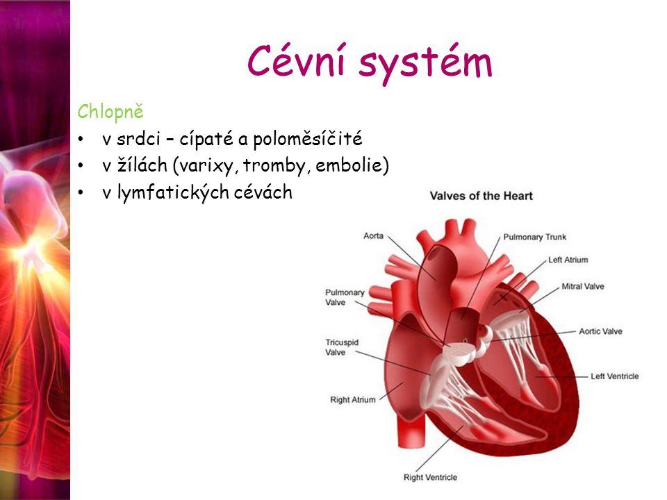 Cévní systém Chlopně v srdci – cípaté a poloměsíčité