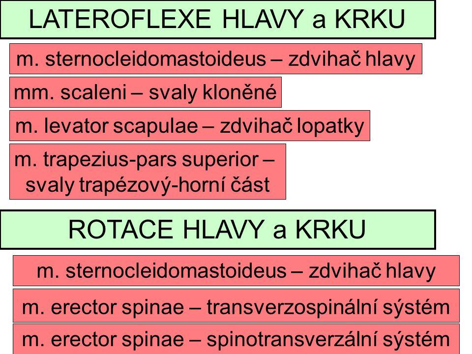 LATEROFLEXE HLAVY a KRKU