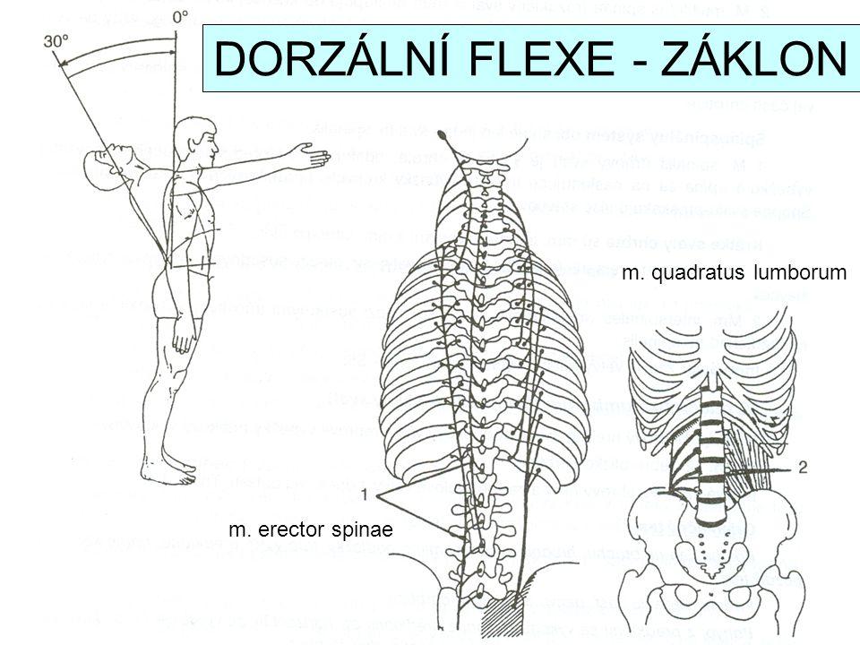 DORZÁLNÍ FLEXE - ZÁKLON
