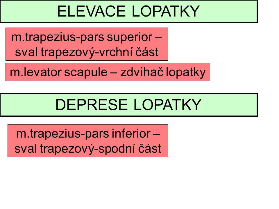 ELEVACE LOPATKY DEPRESE LOPATKY m.trapezius-pars superior –
