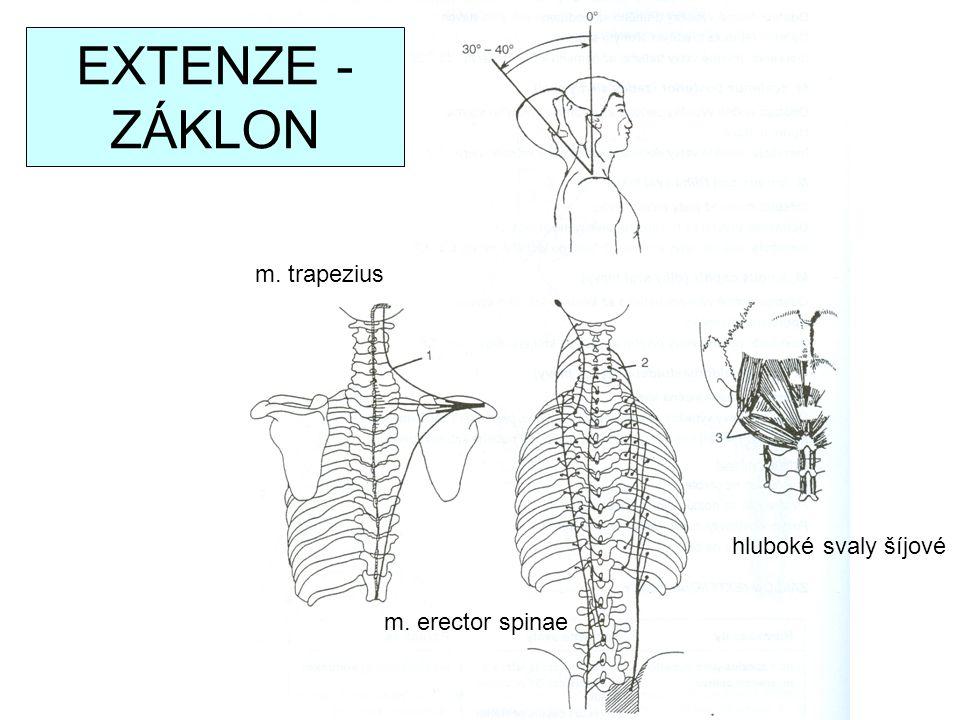 EXTENZE - ZÁKLON m. trapezius hluboké svaly šíjové m. erector spinae