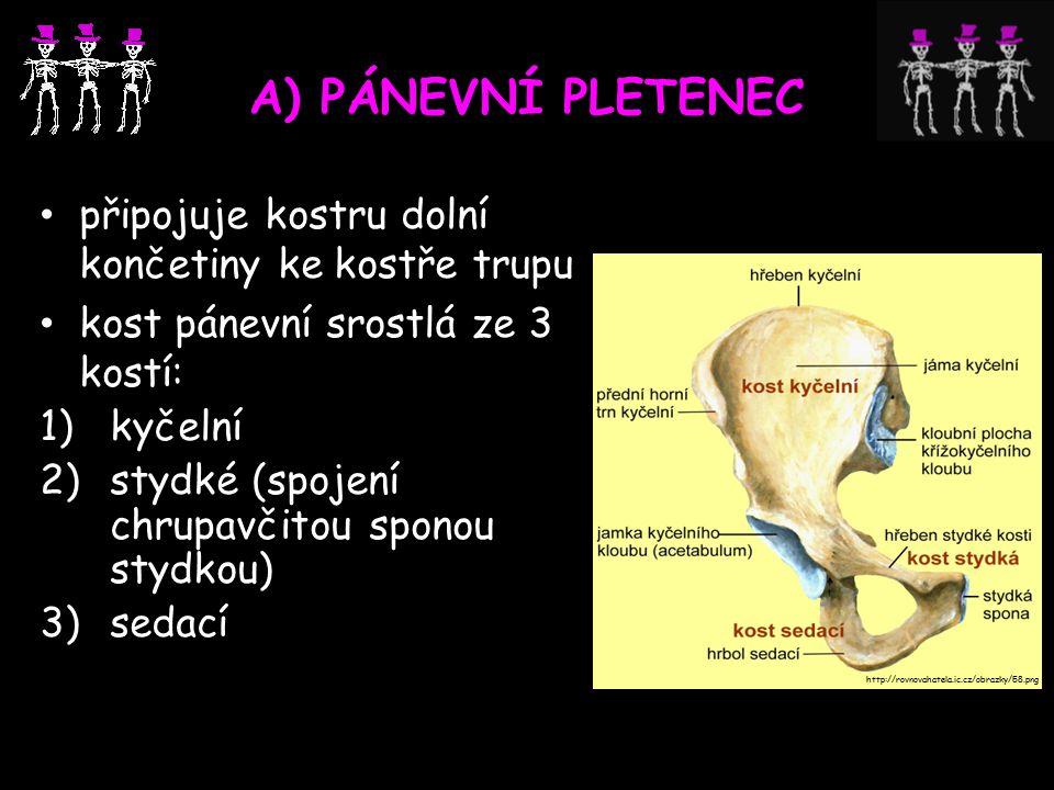 A) PÁNEVNÍ PLETENEC připojuje kostru dolní končetiny ke kostře trupu