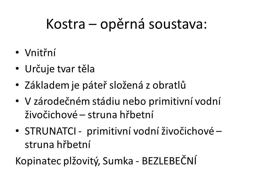 Kostra – opěrná soustava: