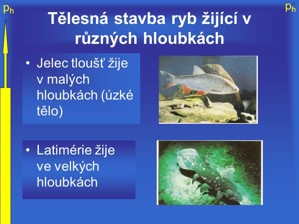 Tělesná stavba ryb žijící v různých hloubkách