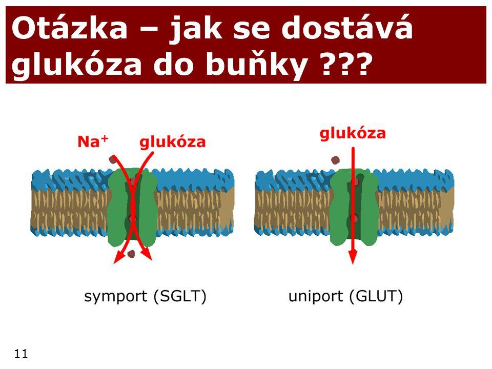 Otázka – jak se dostává glukóza do buňky