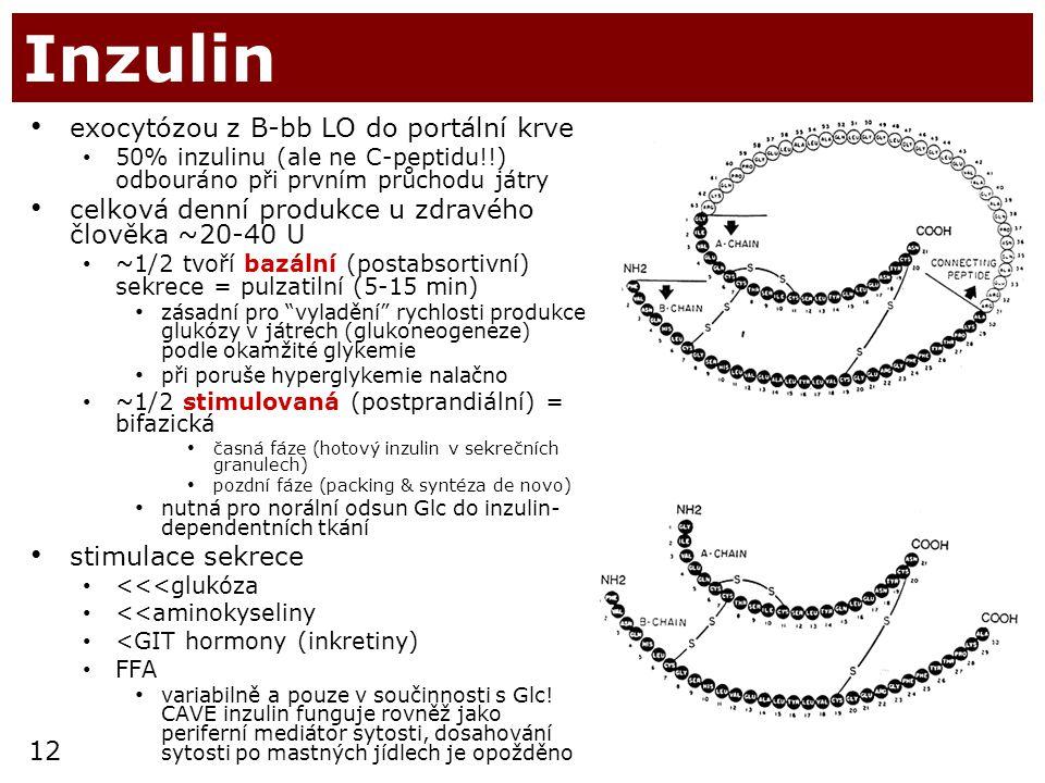 Inzulin exocytózou z B-bb LO do portální krve