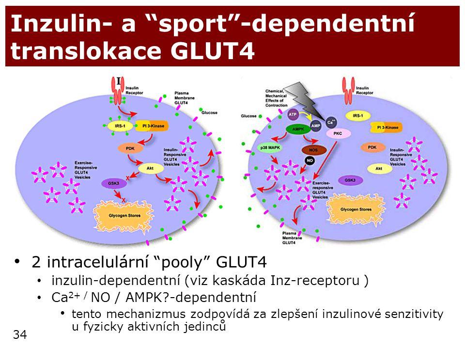 Inzulin- a sport -dependentní translokace GLUT4