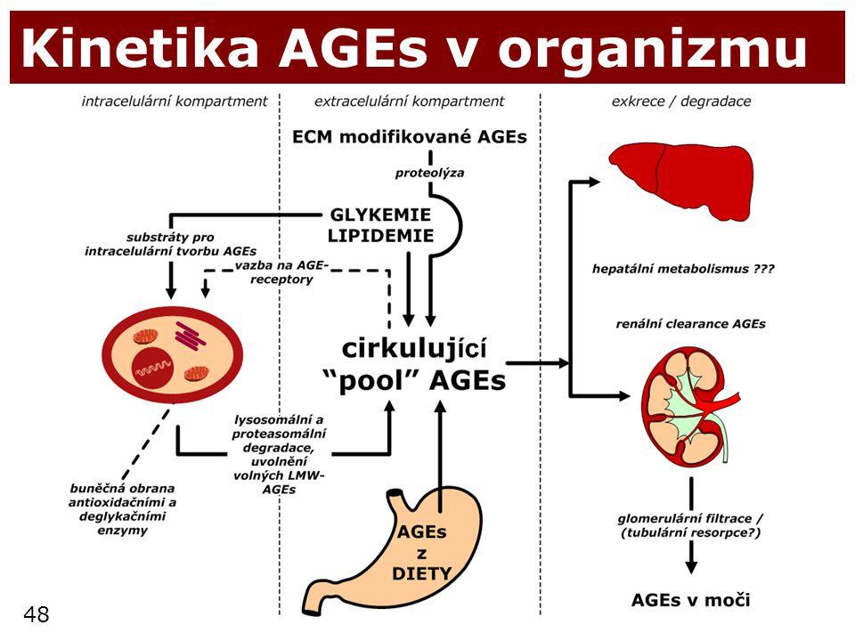 Kinetika AGEs v organizmu