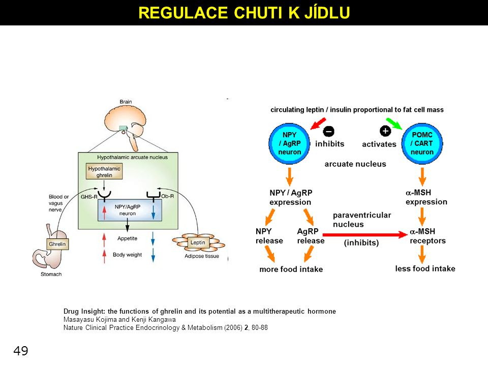 REGULACE CHUTI K JÍDLU Drug Insight: the functions of ghrelin and its potential as a multitherapeutic hormone.