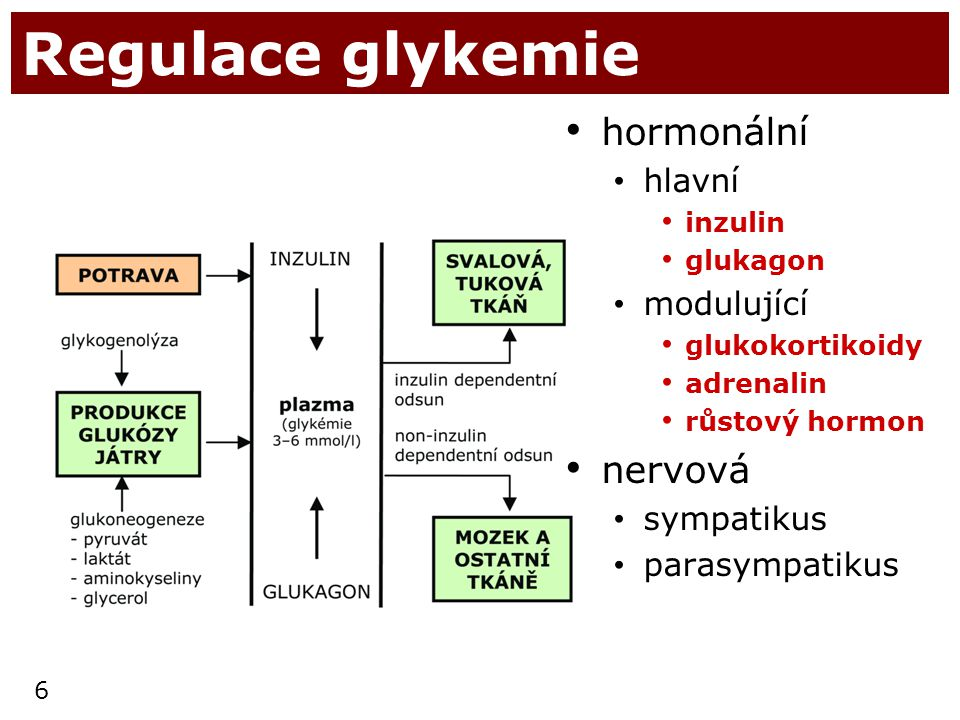 Regulace glykemie hormonální nervová hlavní modulující sympatikus