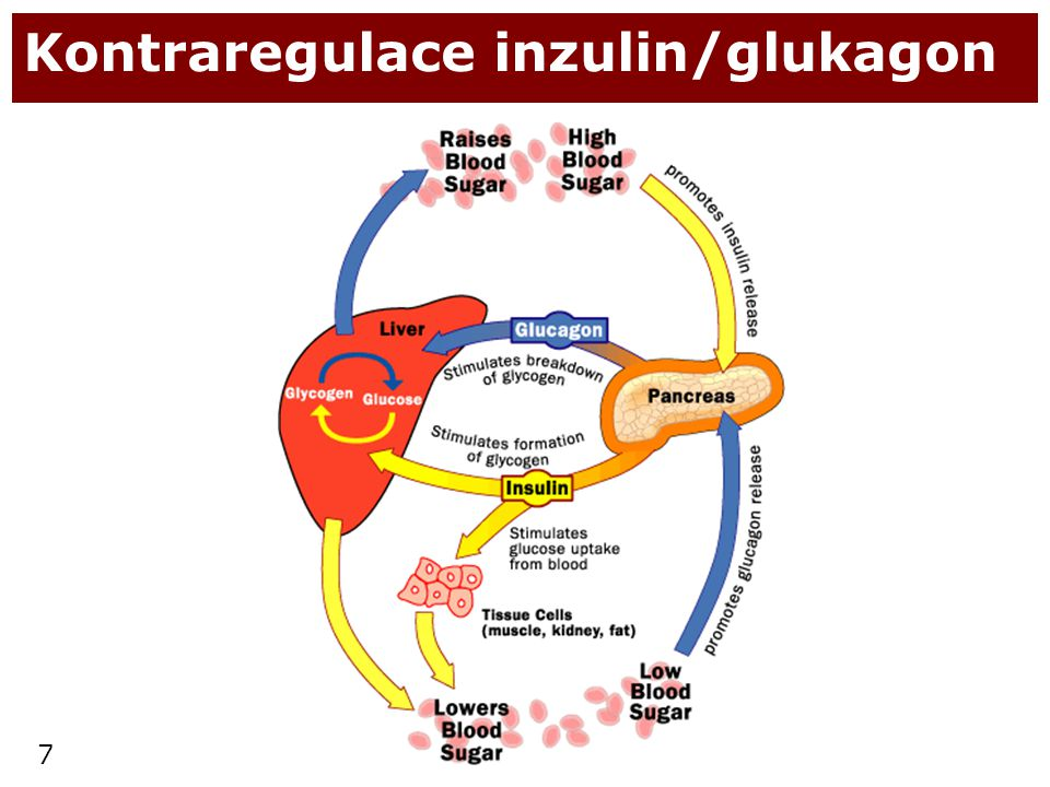 Kontraregulace inzulin/glukagon