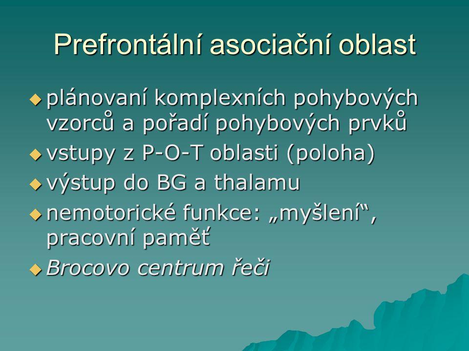Prefrontální asociační oblast