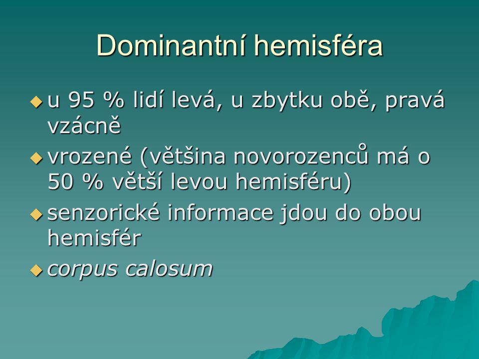 Dominantní hemisféra u 95 % lidí levá, u zbytku obě, pravá vzácně