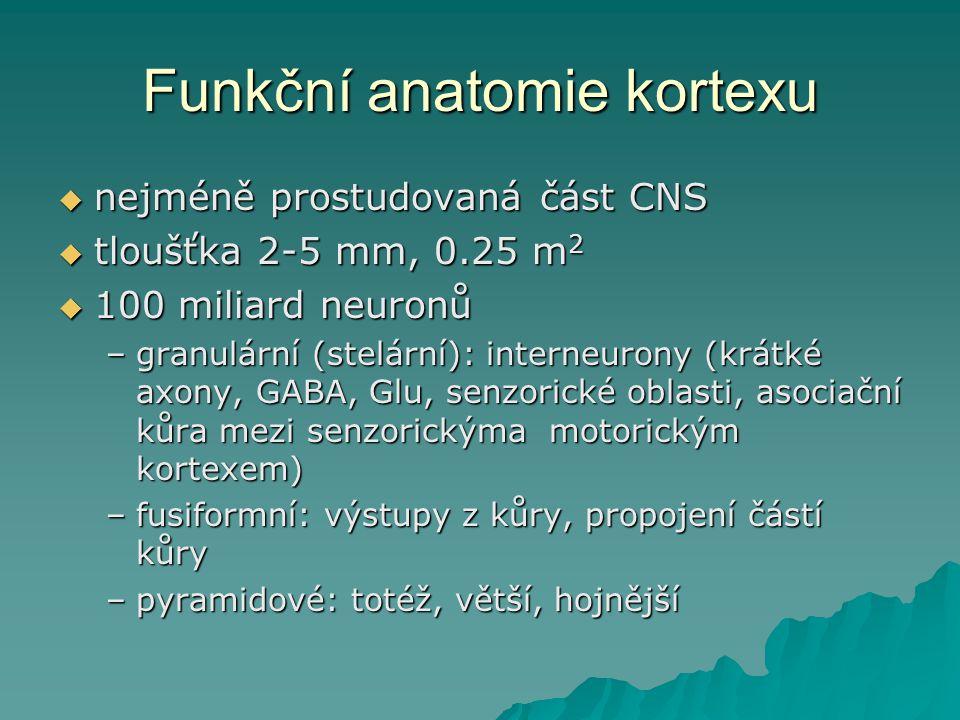 Funkční anatomie kortexu