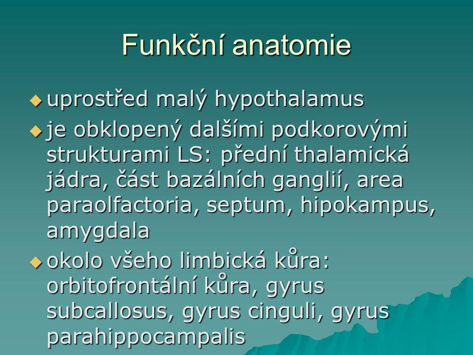 Funkční anatomie uprostřed malý hypothalamus