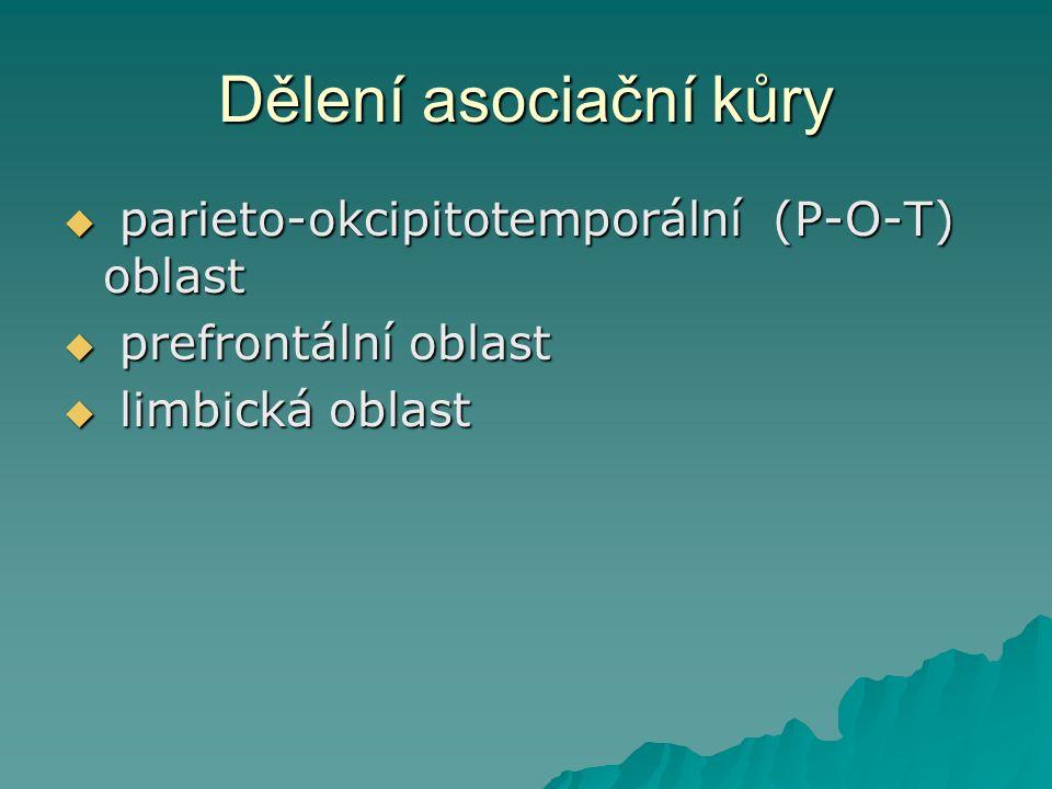 Dělení asociační kůry parieto-okcipitotemporální (P-O-T) oblast