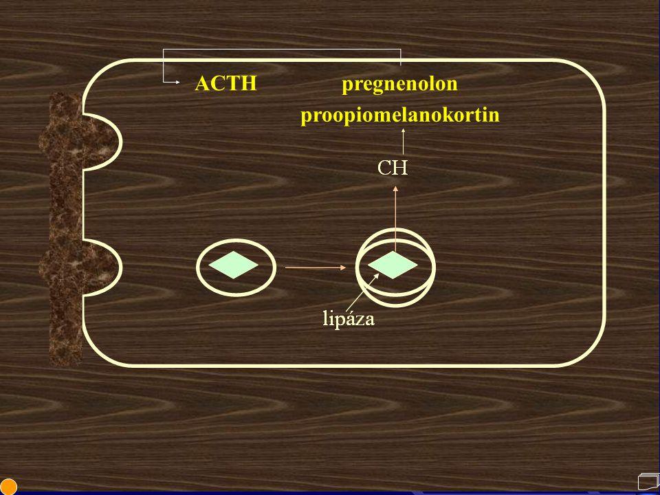 ACTH pregnenolon proopiomelanokortin