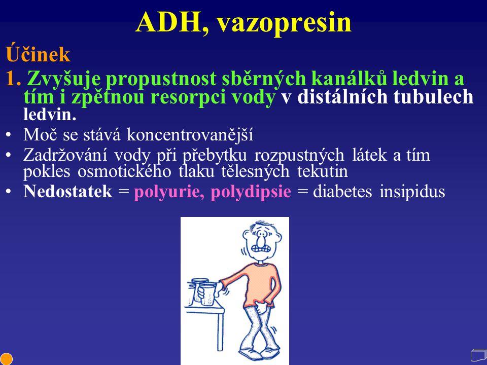 ADH, vazopresin Účinek. 1. Zvyšuje propustnost sběrných kanálků ledvin a tím i zpětnou resorpci vody v distálních tubulech ledvin.