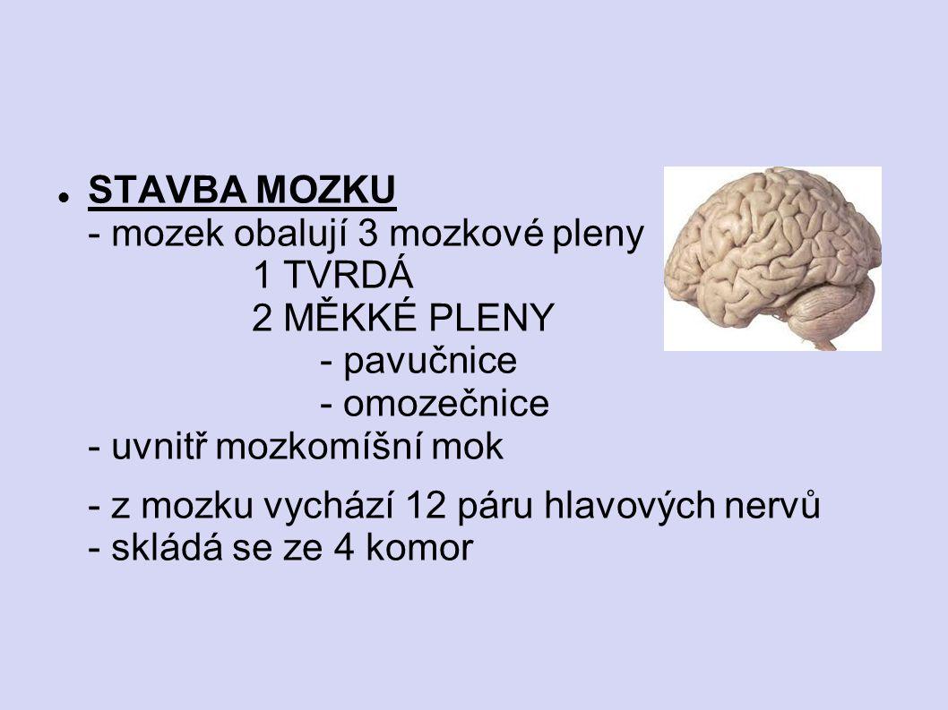 STAVBA MOZKU - mozek obalují 3 mozkové pleny. 1 TVRDÁ. 2 MĚKKÉ PLENY