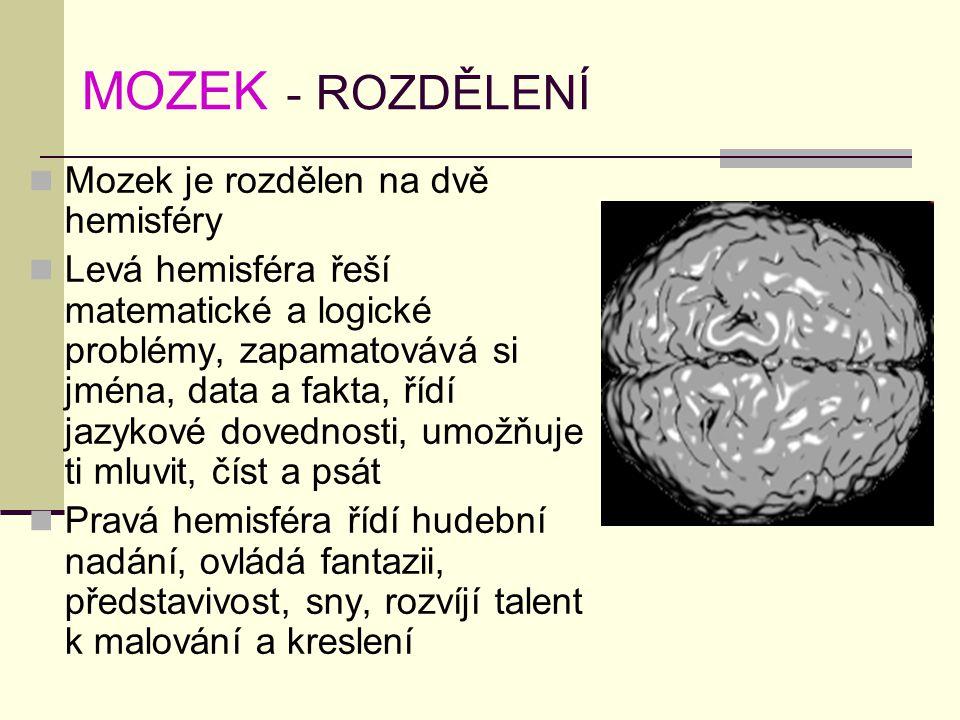 MOZEK - ROZDĚLENÍ Mozek je rozdělen na dvě hemisféry