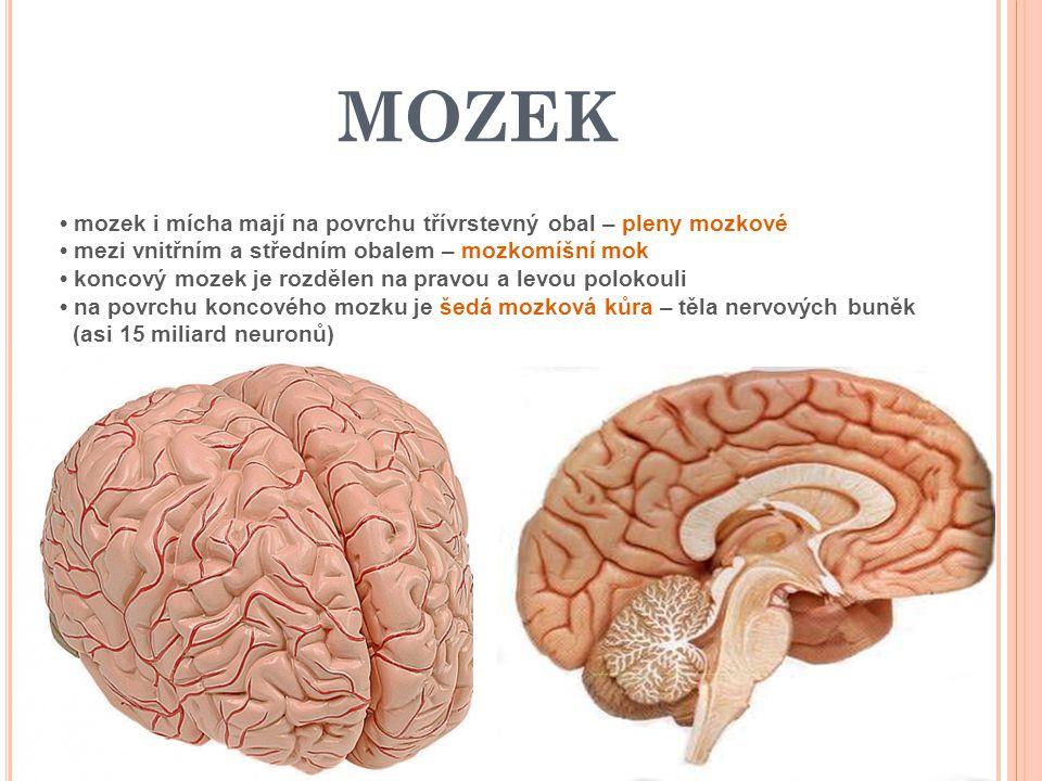 MOZEK • mozek i mícha mají na povrchu třívrstevný obal – pleny mozkové