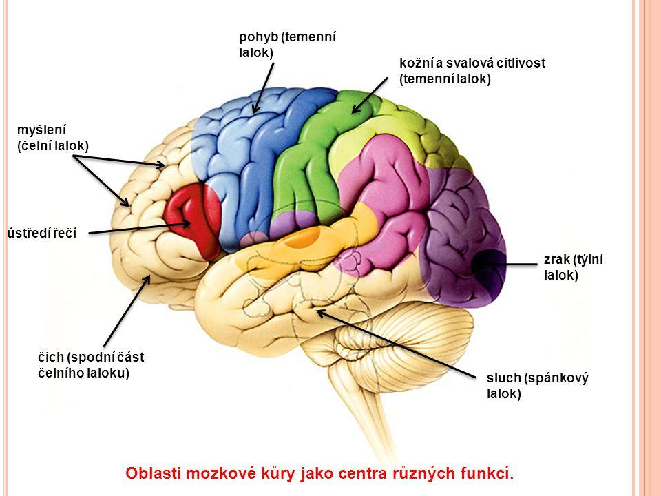 Oblasti mozkové kůry jako centra různých funkcí.