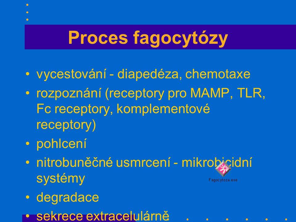 Proces fagocytózy vycestování - diapedéza, chemotaxe