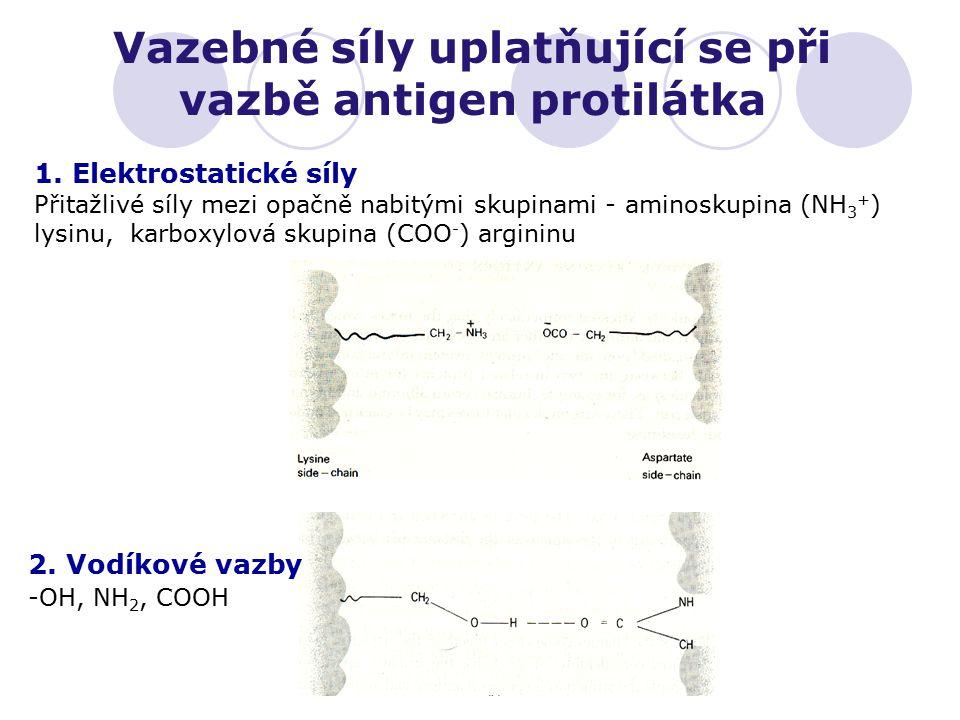 Vazebné síly uplatňující se při vazbě antigen protilátka