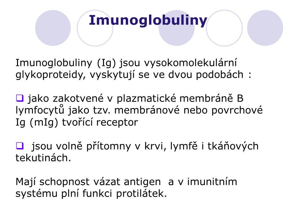 Imunoglobuliny Imunoglobuliny (Ig) jsou vysokomolekulární glykoproteidy, vyskytují se ve dvou podobách :