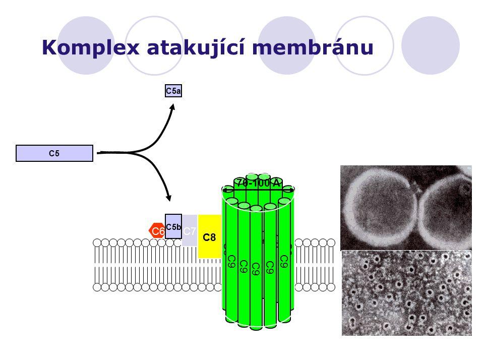 Komplex atakující membránu
