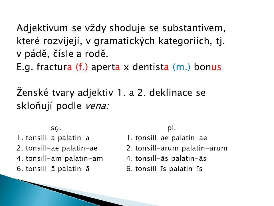 Adjektivum se vždy shoduje se substantivem,