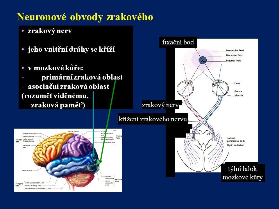 křížení zrakového nervu