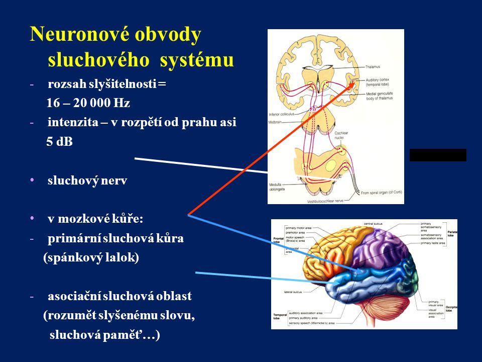 Neuronové obvody sluchového systému
