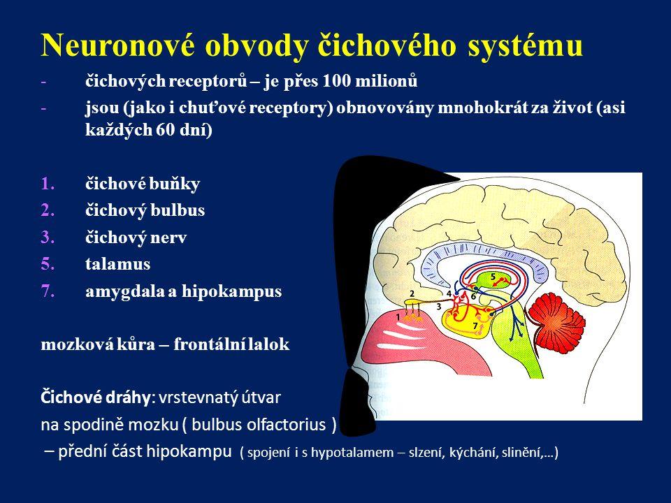Neuronové obvody čichového systému