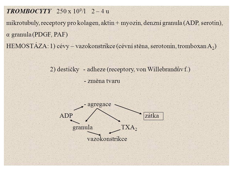 TROMBOCYTY 250 x 109/l 2 – 4 u mikrotubuly, receptory pro kolagen, aktin + myozin, denzní granula (ADP, serotin),