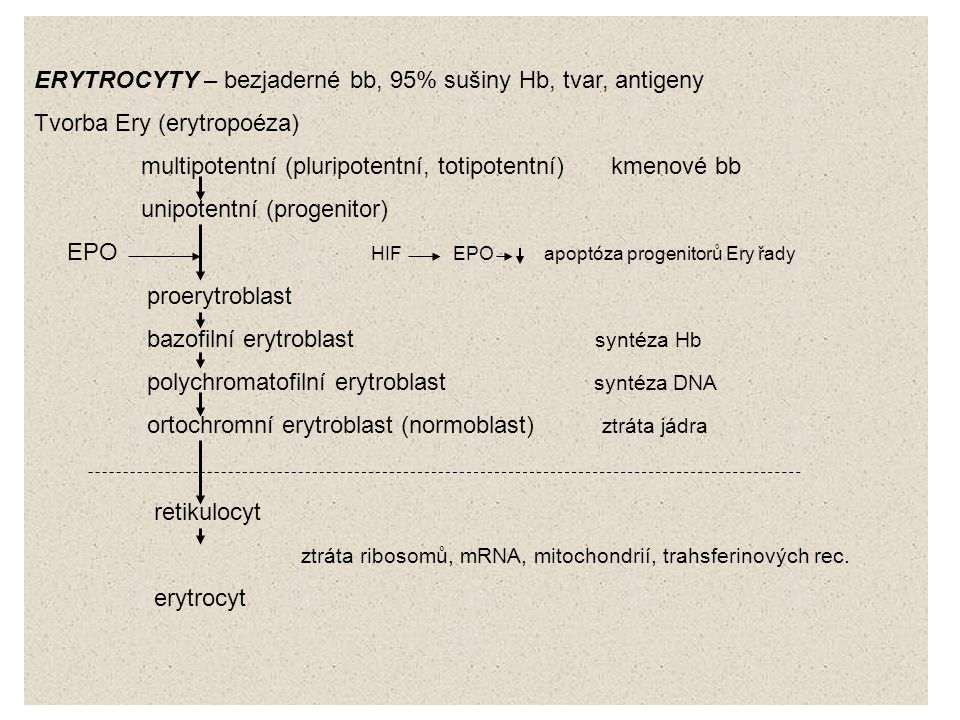 ERYTROCYTY – bezjaderné bb, 95% sušiny Hb, tvar, antigeny