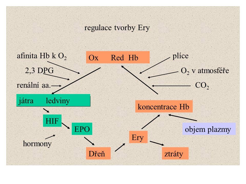 regulace tvorby Ery afinita Hb k O2. 2,3 DPG. renální aa. plíce. O2 v atmosféře. CO2. Ox Red Hb.