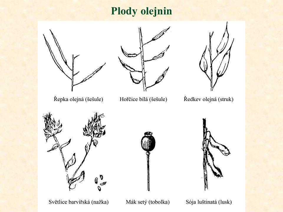 Plody olejnin