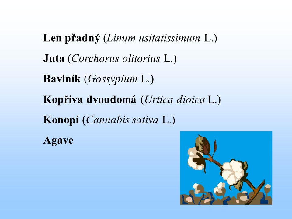 Len přadný (Linum usitatissimum L.)