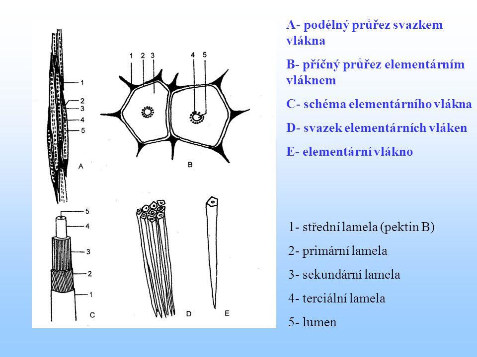 A- podélný průřez svazkem vlákna