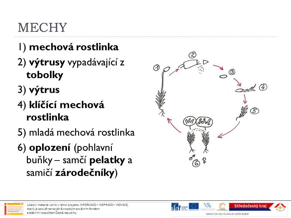 MECHY 1) mechová rostlinka 2) výtrusy vypadávající z tobolky 3) výtrus