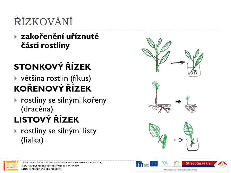 ŘÍZKOVÁNÍ zakořenění uříznuté části rostliny STONKOVÝ ŘÍZEK