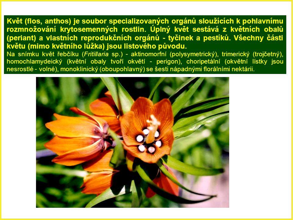 Květ (flos, anthos) je soubor specializovaných orgánů sloužících k pohlavnímu rozmnožování krytosemenných rostlin. Úplný květ sestává z květních obalů (periant) a vlastních reprodukčních orgánů - tyčinek a pestíků. Všechny části květu (mimo květního lůžka) jsou listového původu.