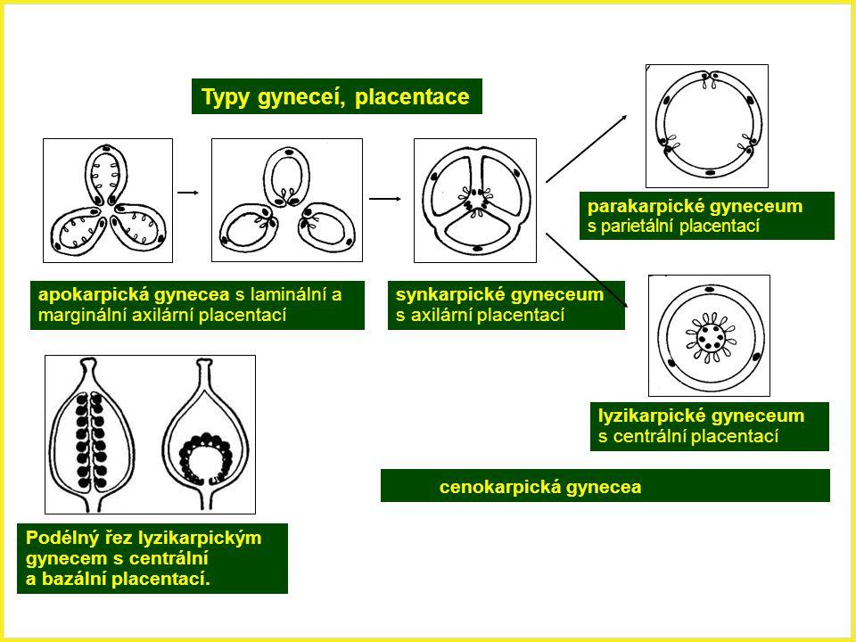 Typy gyneceí, placentace